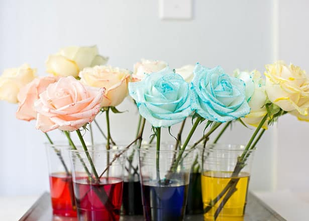 diy rainbow dyed flowers flowers canada blog