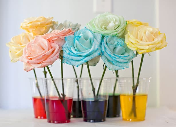 Hello wonderful 10 dazzling rainbow science experiments for Rainbow dyed roses